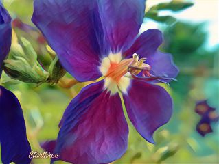 flower nature photography colorful interesting