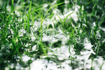 photography outdoors garden grass water