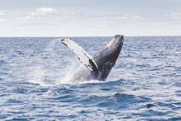 freetoedit whale sea ocean animal