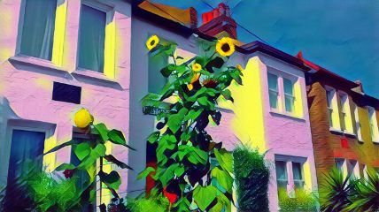 freetoedit sunflower photography houses random