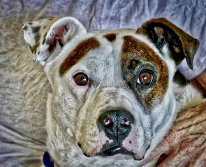 angeleyesimages dogs dogphotography pets petphotography fte