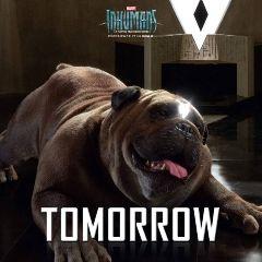 inhumans imax tomorrow series abc freetoedit