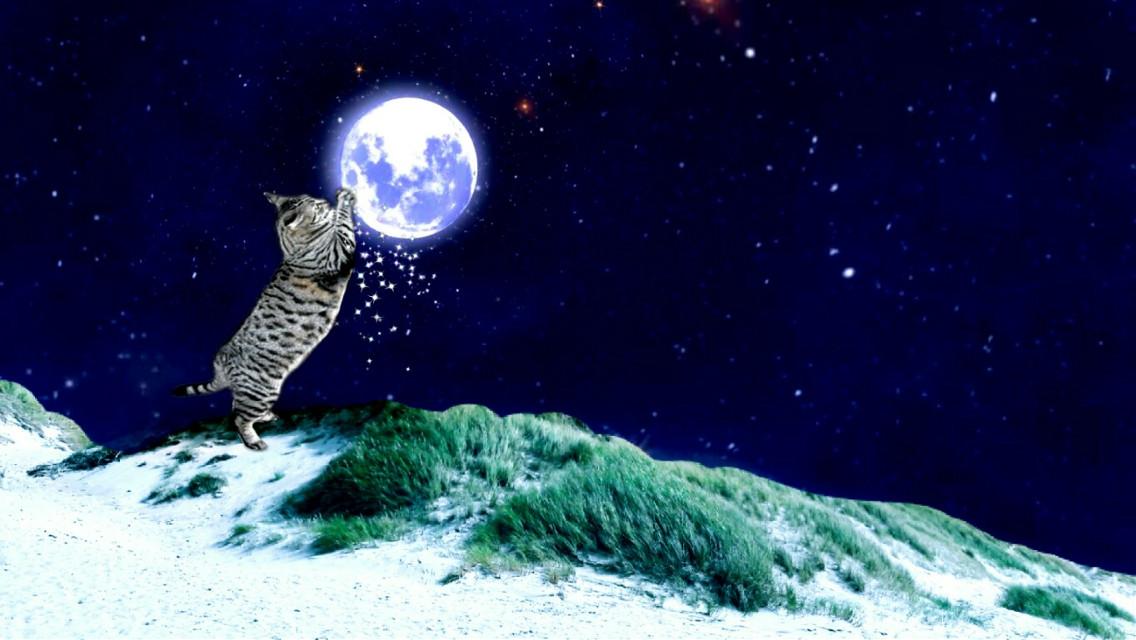 #cat #moon #scratch #night