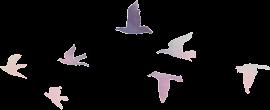 pastel birds hord freetoedit