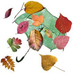 autumniscoming umbrella leaves rain rainmask