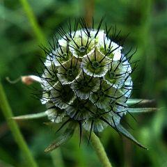 flower poor swabian germany freetoedit