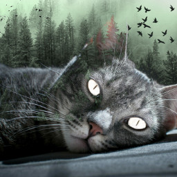 freetoedit forest trees birds cat