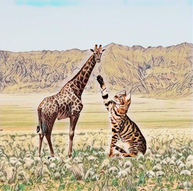 #freetoedit #giraffe #cat  #popsketchmagiceffect