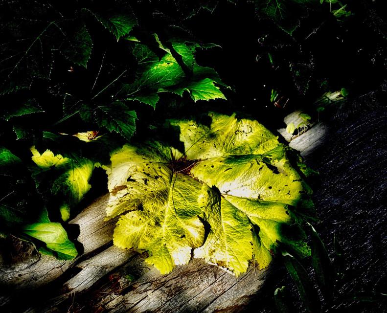 LateLite #AngelEyesImages#landscape#landscapephotography#nature#naturephotography#nikon#nikonphotography#nikonusa#nikond5300#lumix#lumixfz1000#lumixusa #instagrammers#instagramers#picsart#picoftheday#forest#flora#