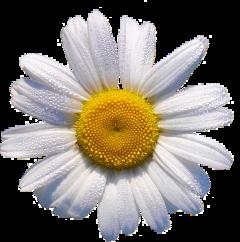 sticker cute flower flowers flowercrown
