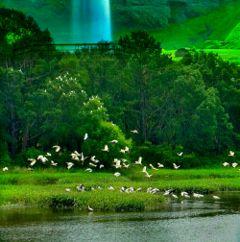 freetoedit nature trees river birds