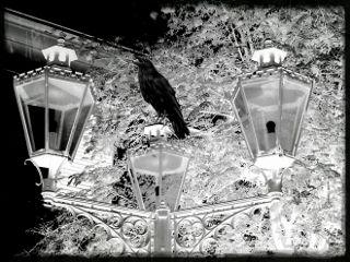 pautzispics pautzisedits lantern streetlamps crow