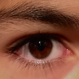 eyes brown hispanic eyebrows photography