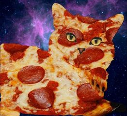 freetoedit pizza catsofpicsart