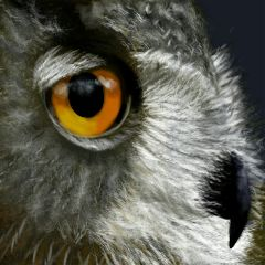 wdpeye nature owl bird mydrawing