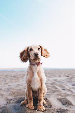 freetoedit pet dog cute puppy