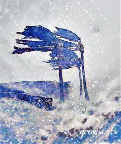 freetoedit hurricane florida irma
