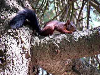 photography squirrel tree nature wildlife freetoedit