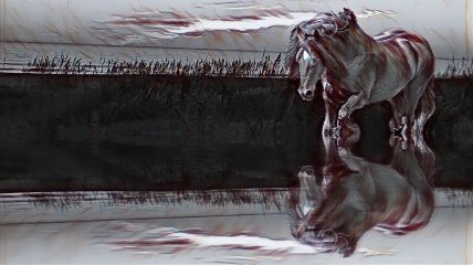 freetoedit horse marsh running reflection