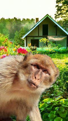 freetoedit remixit monkey home landscape.