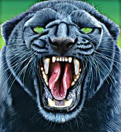 freetoedit wildcats