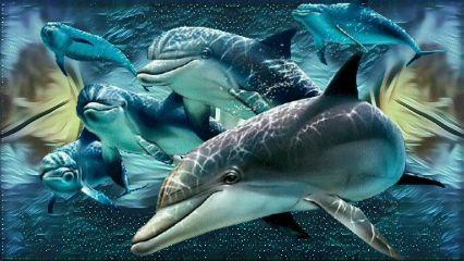 myedit delfines freetoedit