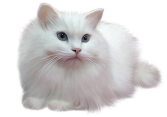 cat chat gato ftestickers stickers