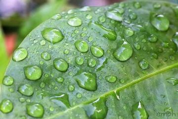 green rain nature photography evamiretphotography