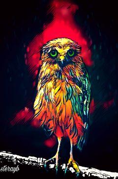 owl colorful retro vintage popart
