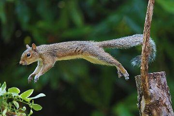 freetoedit nature animal squirrel jumping