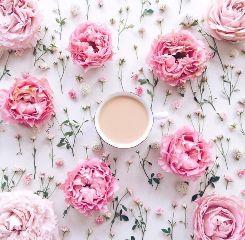 aesthetic flowers freetoedit