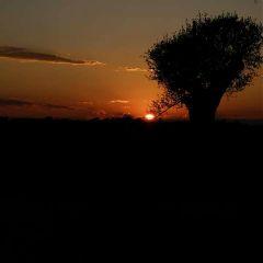 sunset nature photography travel tree freetoedit