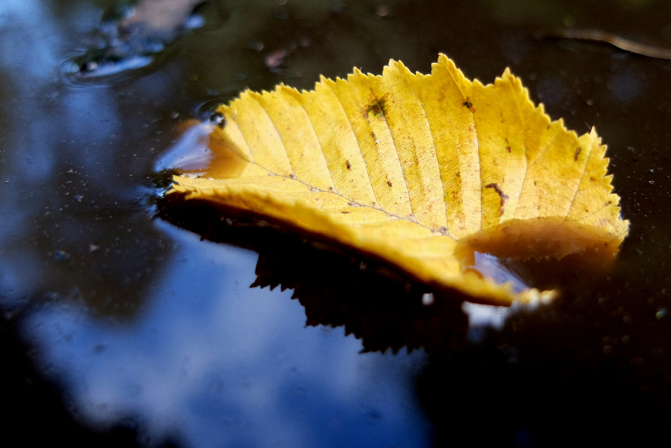 #dpcreflection #autumncolors #autumn #photooftheday #interesting