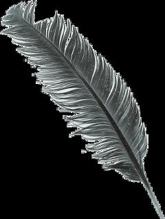 feather01 freetoedit