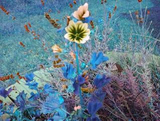 freeflowing gardens flowers nature love freetoedit