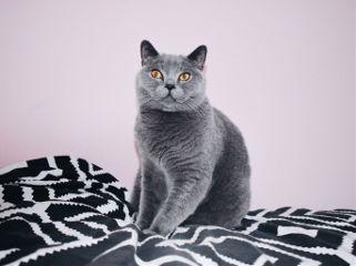cat kitten kitty black pet freetoedit
