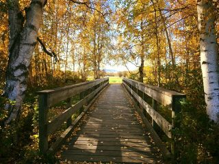 freetoedit fall bridge light tree