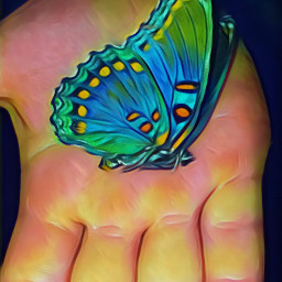 butterfly colors nature bug