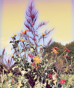 freetoedit flowers hdr crop soulmagiceffect