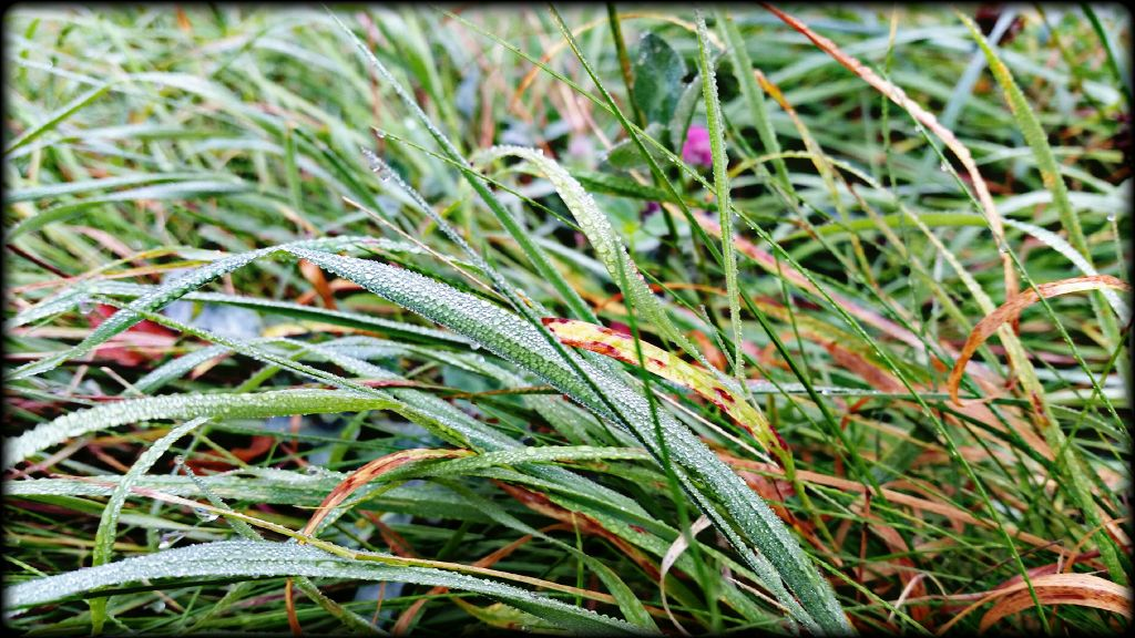 #goodmorning #grasandwater #waterdrops #park #wood #forest #field