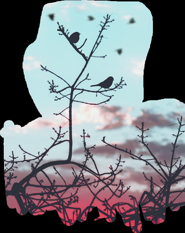 #passarinhos