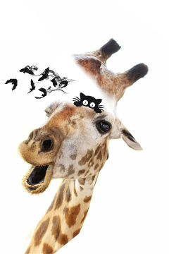 giraffe what