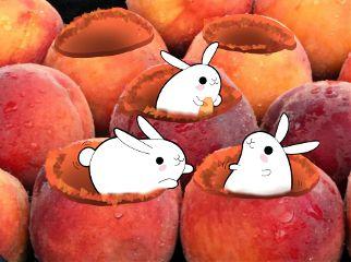 rabbits peaches freetoedit