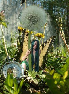 fairy dandelion pocketwatch cutegirl summer