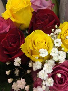 beautiful fresh colorful roses