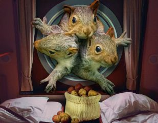 freetoedit thethreestooges squirrels hole squeezing