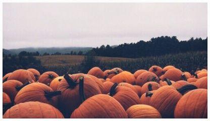 pumpkins patch autumn fall photo