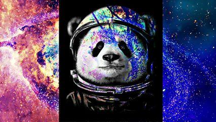freetoedit panda🐼 astronaut galaxy cool