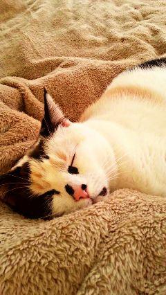 cat hdr petsandanimals photography myphoto