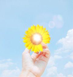 sun sunflowers sky positivevibes positive freetoedit